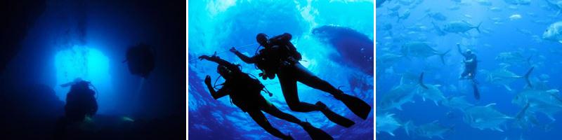 Fin Divers Club Membership